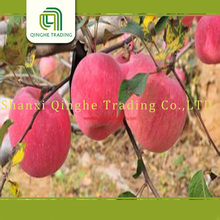 high quality fuji apple/peach growing paper bag/fuji apple supplier from india