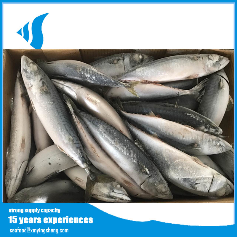 seafood frozen pacific mackerel whole round fish for sale