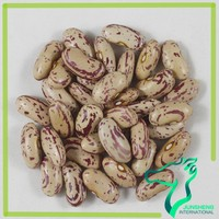 Sugar Beans South Africa, Red And White Speckled Kidney Beans