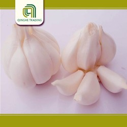 whole sale garlic/cheap price with low price