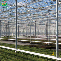 Vegetable Planting Agricultural Venlo Roof Glass