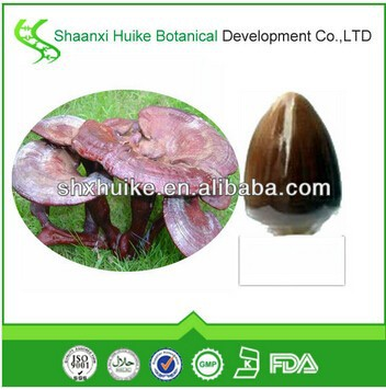 Inventory 100 natural ganoderma lucidum extracts in high quality