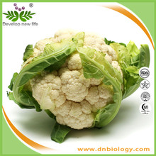 Iso9001 factory supply Cauliflower Extract/Cauliflower powder 4:1~20:1 for bodybuilding supplements