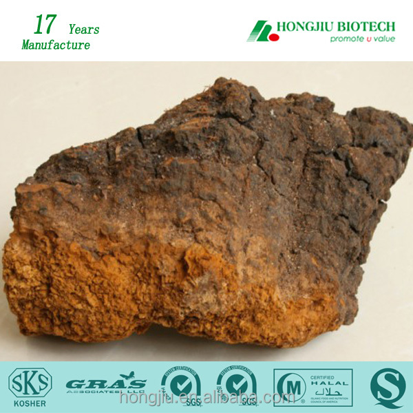 High Quality Chaga Extract 20% Polysaccharides Powder/Chaga Mushroom Extract in Bulk