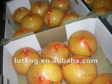 Honey Pomelo 2014 new crop for Russia
