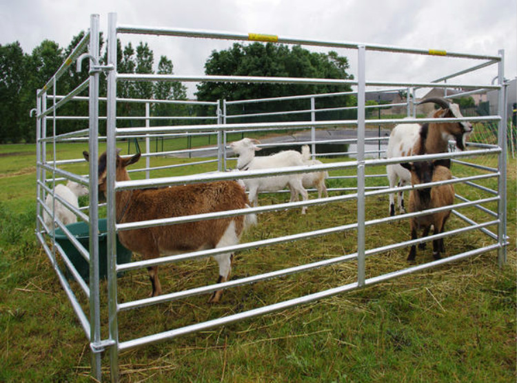 6*8/10/12 ft sheep panel/cattle panel/horse panel