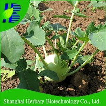 Hybrid F1 Kohlrabi Seeds with tolerance to barren soil