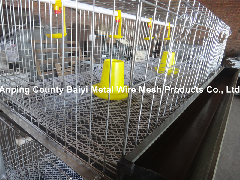 Meat chicken cage (Direct factory)