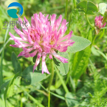 natural estrogen Red clover p.e. isoflavones 8%-40% HPLC red clover extract
