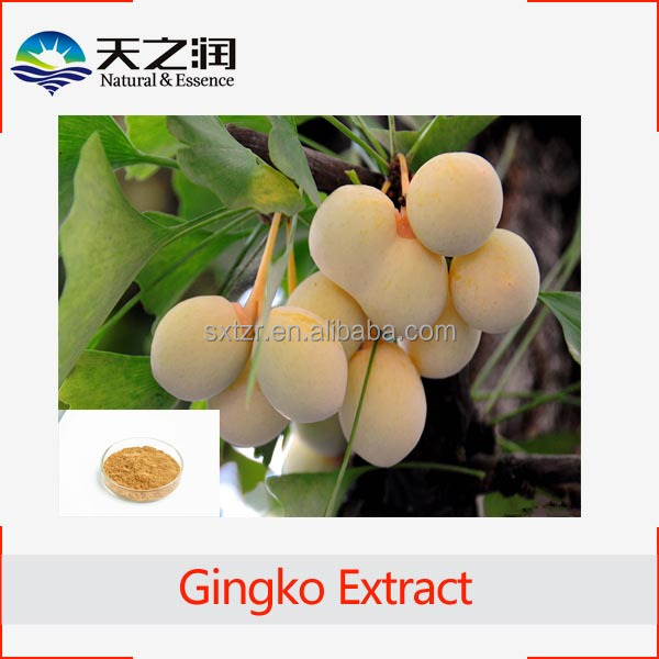 Hot Product Semen Ginkgo Seed Powder Extract/100% natural Semen Ginkgo Extract powder