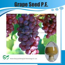 Grape Seed Extract/Grape Seed Extract Powder/Grape Seed P.E.