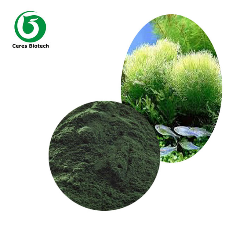 High Quality Spirulina Organic