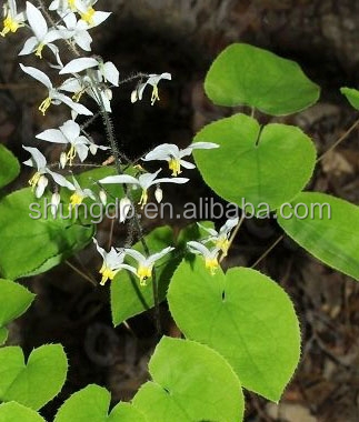Pure Natural epimedium leaf powder honry goat weed extract 40% icariin