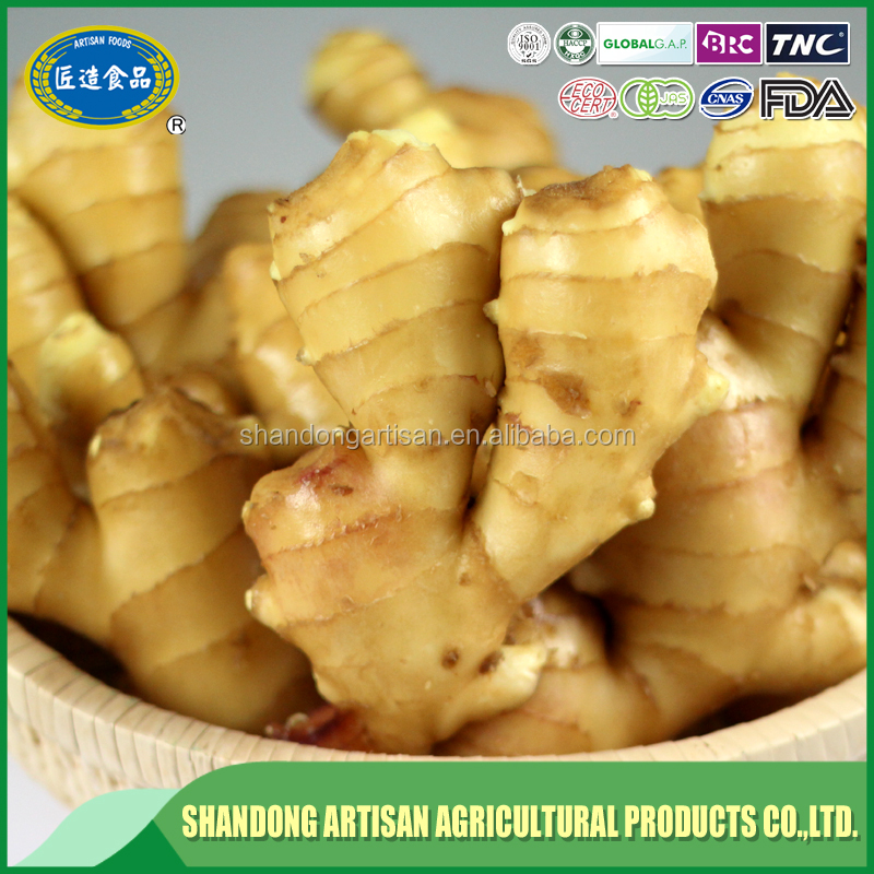 factory direct sell preserved ginger popular in eruopean market