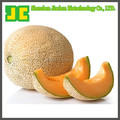 High quality Cantaloupe Ectract