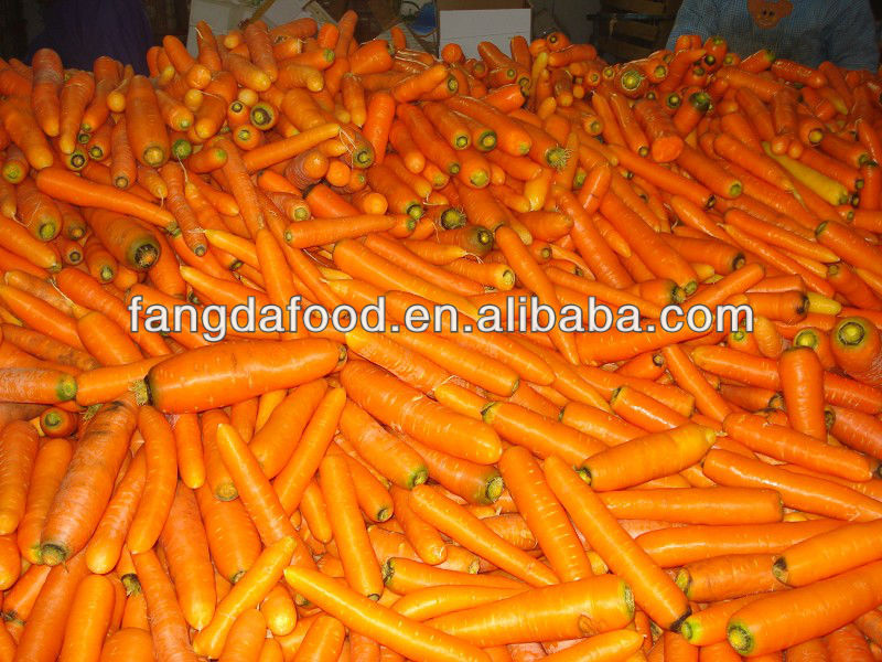 washed and polished fresh carrot