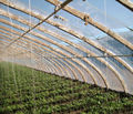 PE Long-life Anti-drip Film For Greenhouse