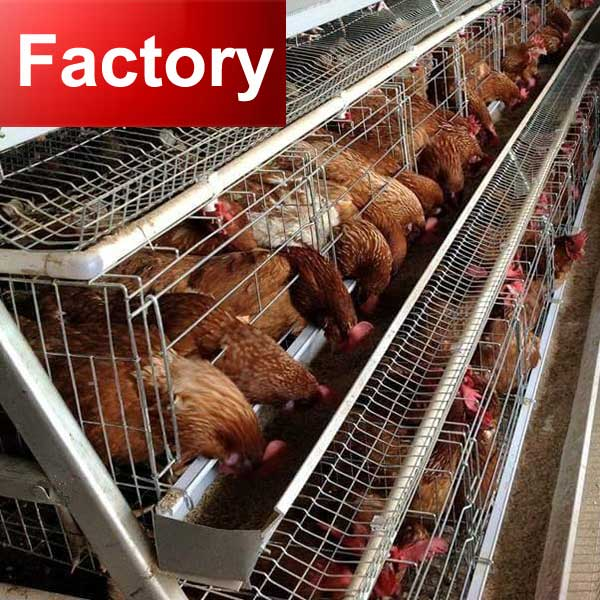 Factory automatic ventilating system poultry grower cages