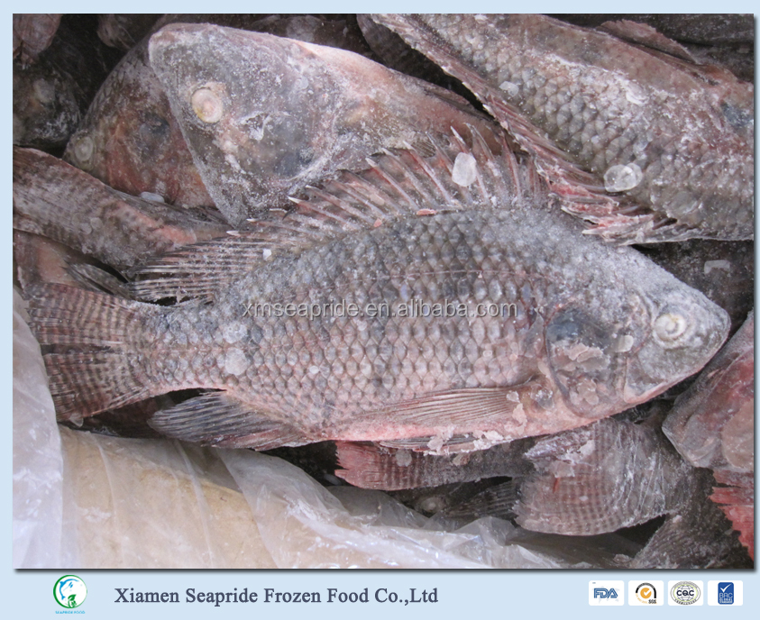 Sea Foods And Frozen Foods Fish Frozen Tilapia