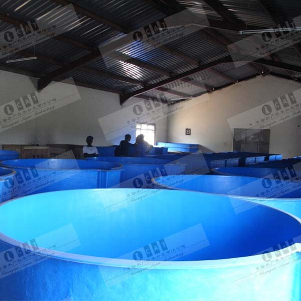 Indoor recirculating aquaculture system fish farm RAS