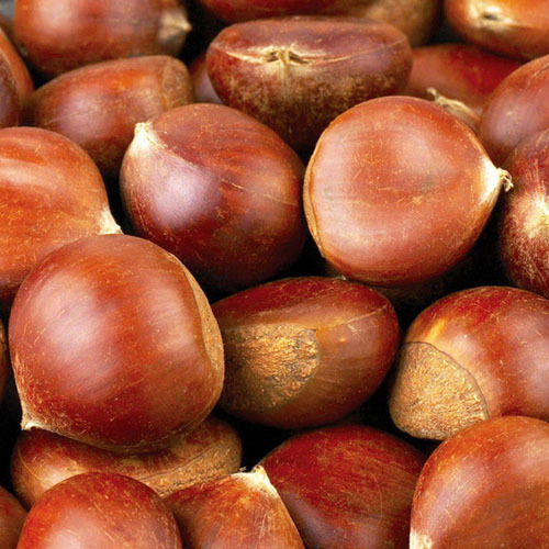 Chinese chestnut liquid and powder food grade flavour