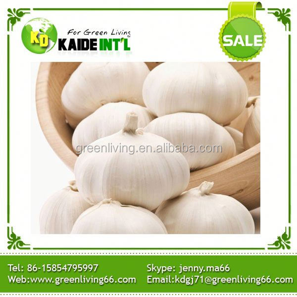 6cm Europe Garlic