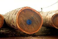 High quality Cameroon Wood Log Timber for Sale