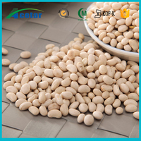 natural product plants extraction white kidney bean carb intercept