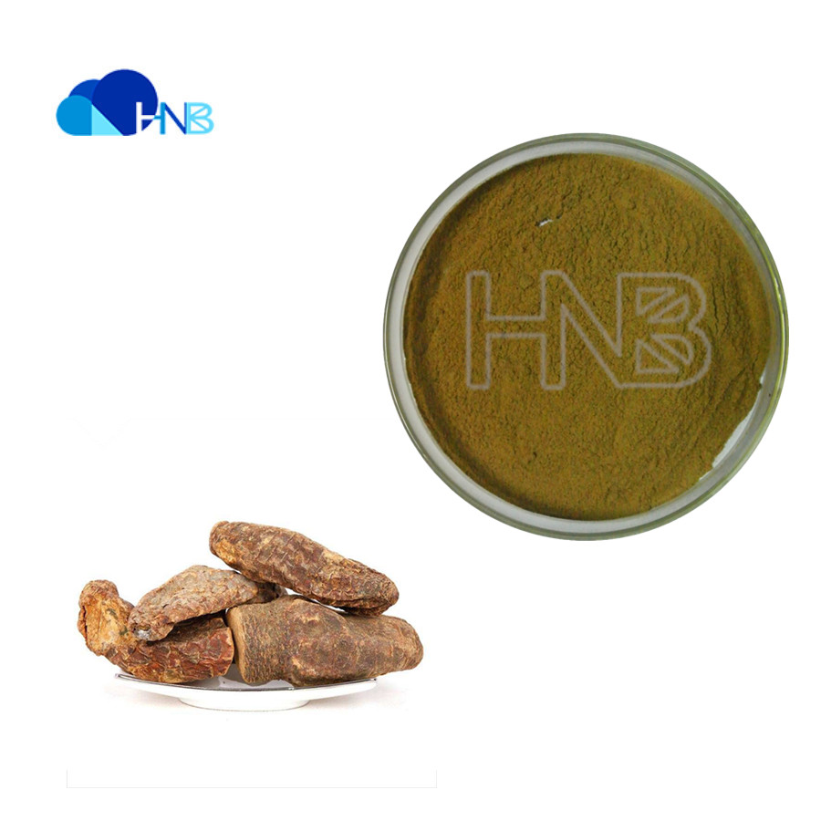 Chinese herbal medicine cistanche plant extract with Cistanche salsa and Cistanche deserticola