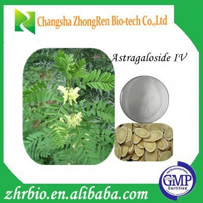 Competitive Price Astragalus root extract10% Astragaloside IV