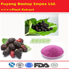 Sang shen wholesale Mulberry P.E. 100% Natural Mulberry Fruit Extract
