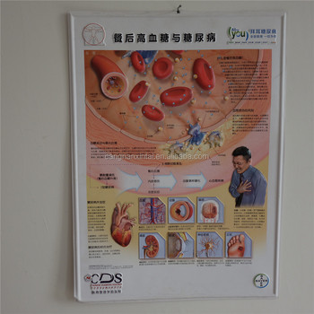 2017 3d chart poster for human female anatomy