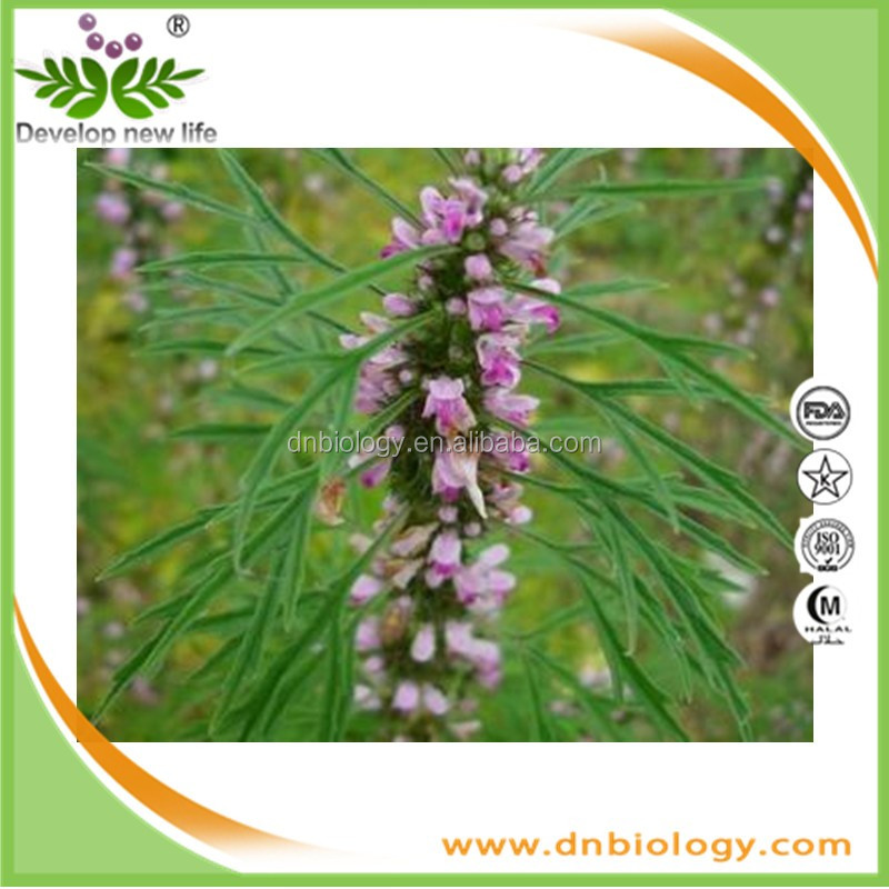 supply China supplier Chinese herb medicine motherwort extract stachydrine