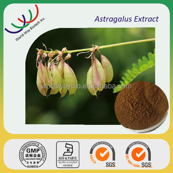 Free sample herb medicine Astragalus extract 70% polysaccharides 0.3%~98% astragaloside,NATURAL anti-inflammatory astragalus PE