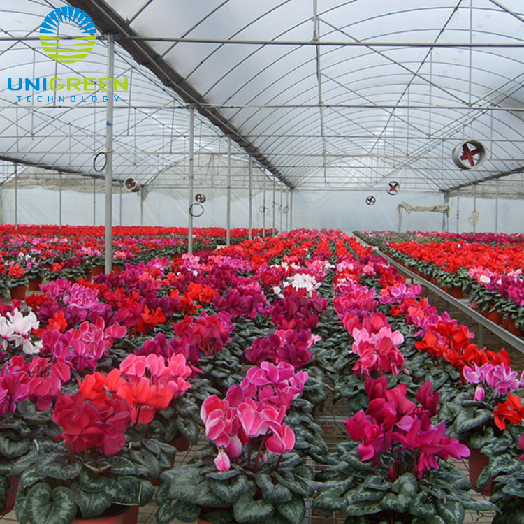 Hot galvanized steel frame poly high tunnel Vegetable Used Plastic-film Greenhouse