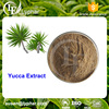 13 Years Company Provide Yucca Extract Powder