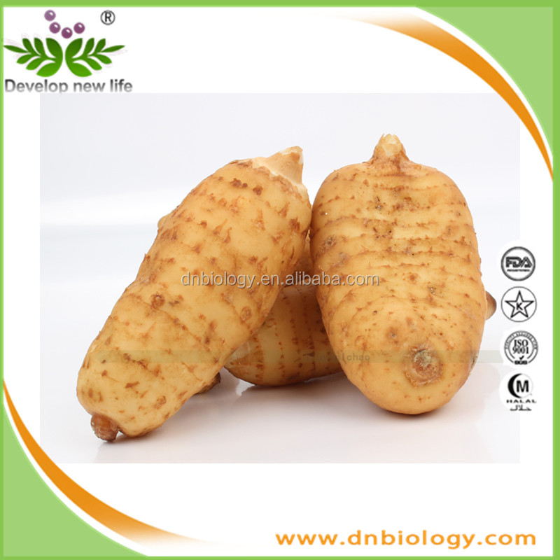 Free Sample Gastrodin Powder 98% Gastrodia Tuber Extract 100Percent Natural