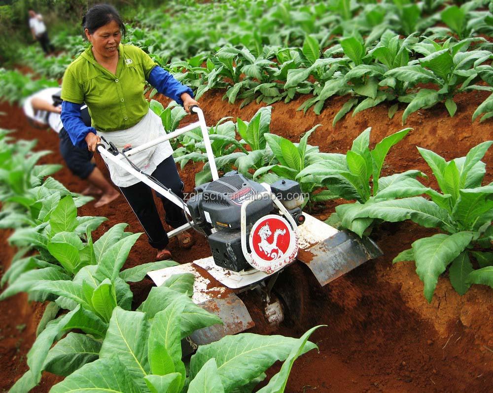 tobacco cutting machine in field