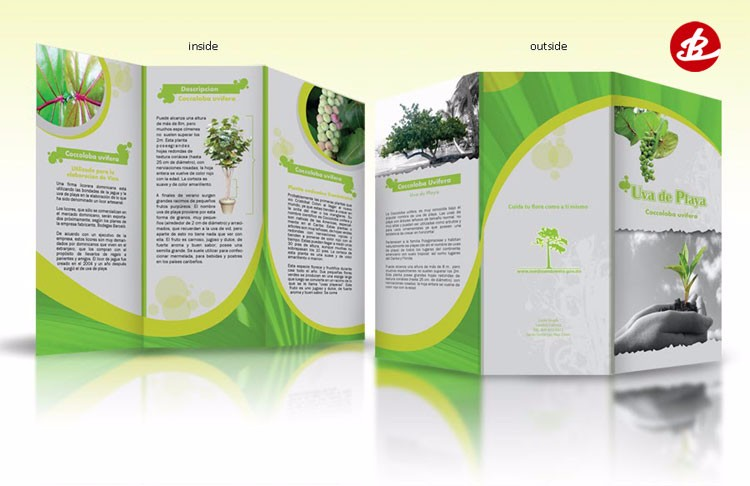 Cheap Flyer/Folder Printing Manufacturer , China Professional Brochure Printing