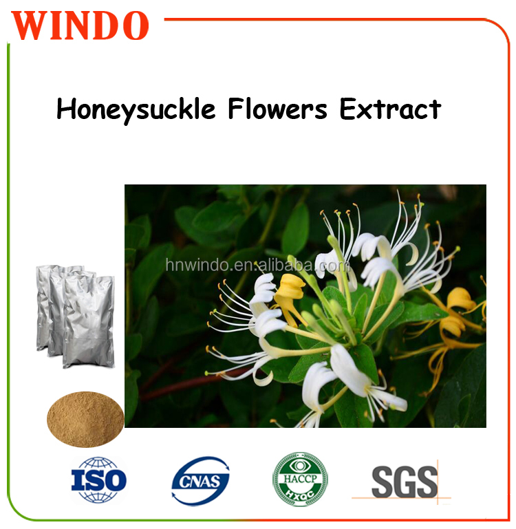high quality extracts from Flos Lonicerae/ honeysuckle flower