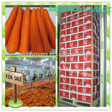 HOT SALE XIAMEN FRESH CARROT(2013 New) 316 Quality corp