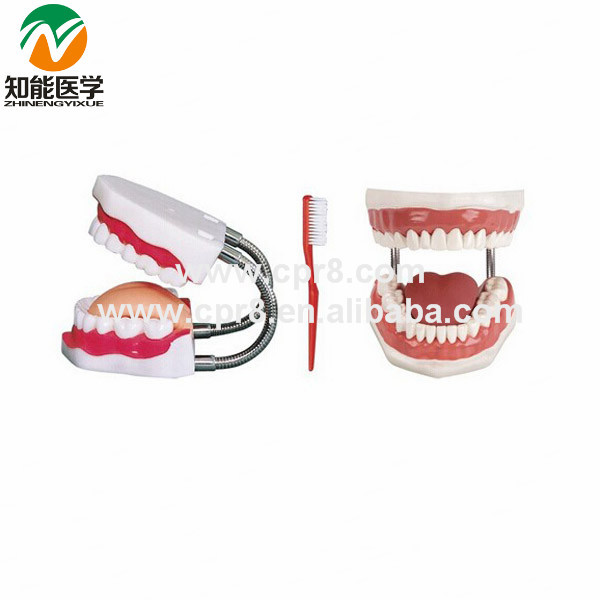 BX-HY Medical Tooth nursing Care Model