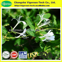100% Natural japanese honeysuckle flower bud extract (Flos Lonicerae extract)