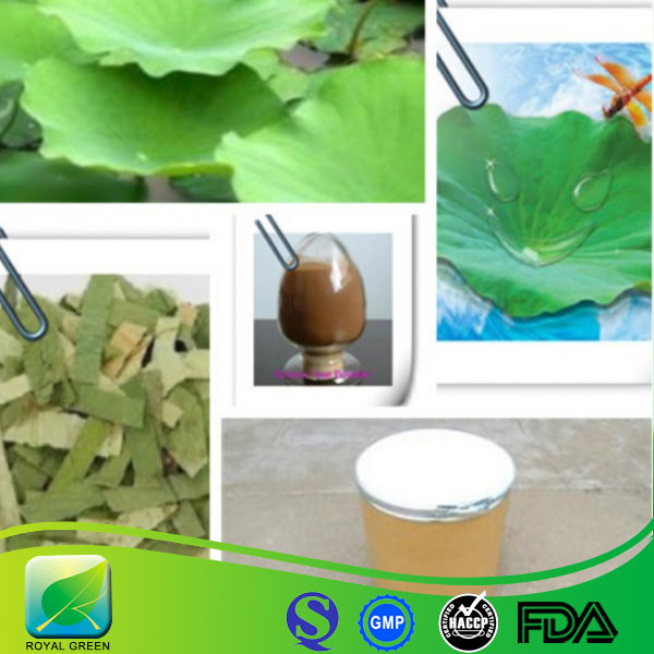 Lowering the blood pressure lotus leaf extract powder/Lotus leaf plant extract