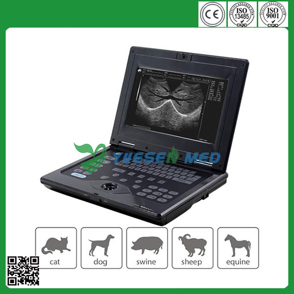 Convex/linear/Micro-convex scan mode High performance YSVET0210 vet portable ultrasound machine for pregnancy