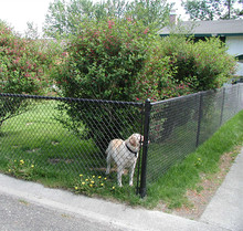Black chain link wire mesh fence panels for dog fencing