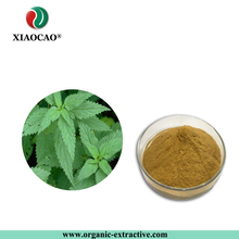 Factory Supply 100% Pure Natural Stinging Nettle Extract