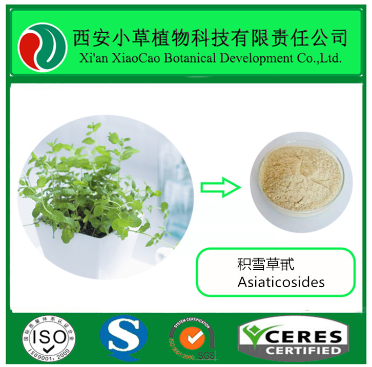 Factory Supply Centella Asiatica Extract/Gotu Kola Extract/Asiaticosides Powder