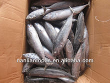 200-300g frozen bonito suppliers