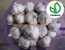 Fresh Red Skin Garlic 6.0cm